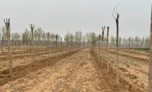 河北官方通报数百亩耕地种树:如属实将追责