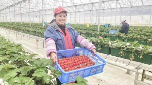 两会声音丨全国政协委员杨国强最挂心的几件事:现代农业、科技创新、乡村振兴