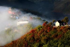 河南林州:秋染柏尖 共赏红叶