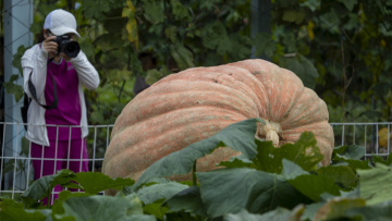 Giant pumpkins and watermelons become hit at exhibition in northeast China