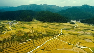 Golden rice terraces in southwest China