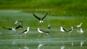 Poyang Lake welcomes first migratory winter bird arrivals