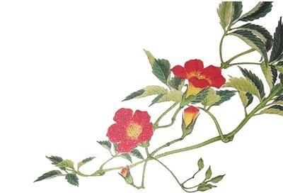 青青草木 亦有人间旧绪  由《古典植物园》说起