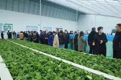 全省鱼菜综合种养技术经验交流观摩会在晋源区举行