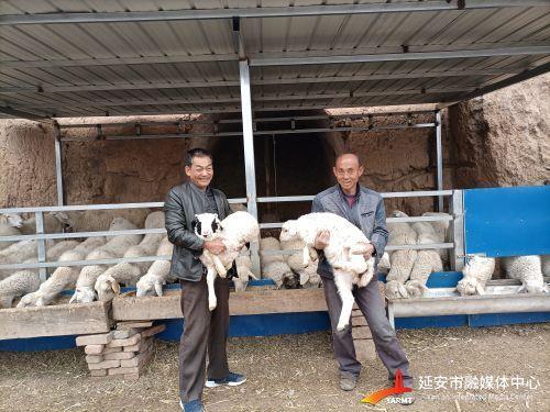 """生态经济""""双赢"""" 村民发上""""羊财""""(分离(265522)-20210406102211"""