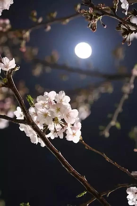 今日元宵,送你一组月照,一首诗词,一颗明心,愿月圆人团圆!