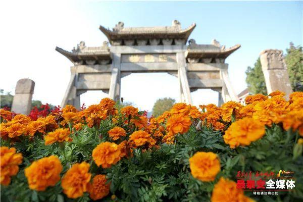 16万盆花卉扮靓泰安街头,浓厚氛围喜迎国庆节