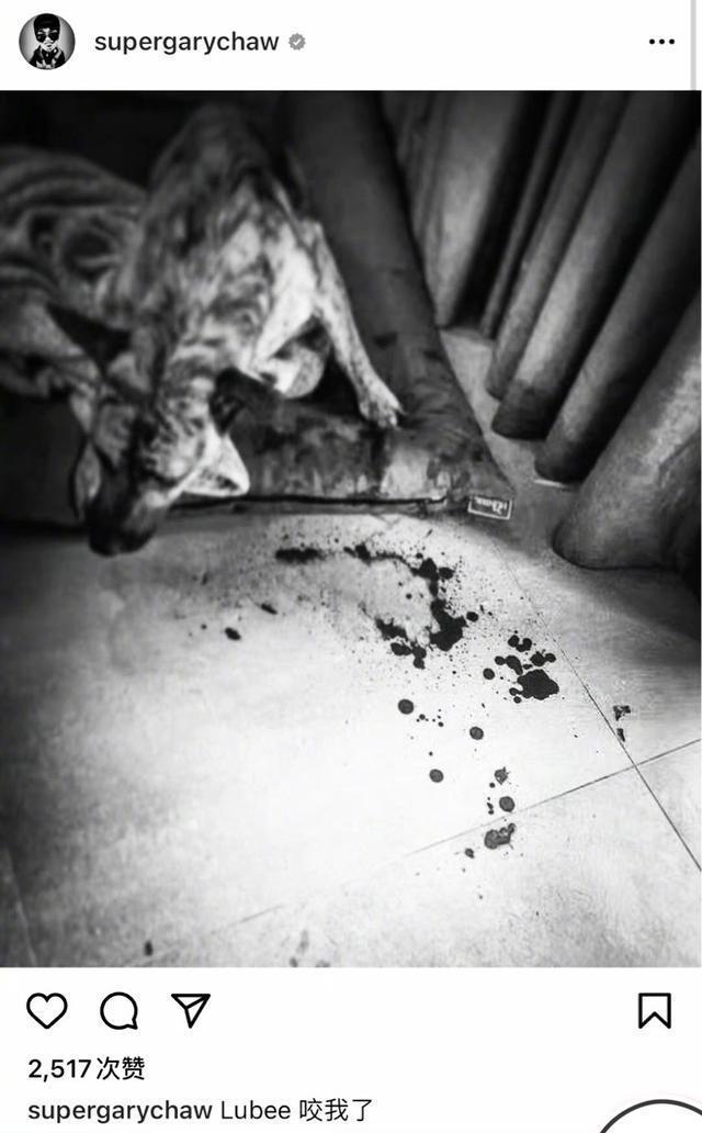 曹格被收养的流浪狗咬伤 地板血迹斑斑触目惊心