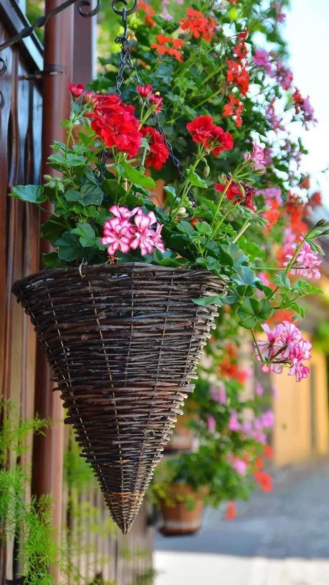 世上最美的鲜花小镇,胜似人间天堂!