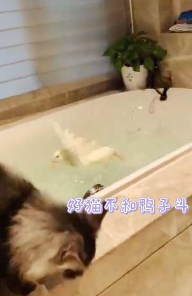 靠直播带货致富 薇娅晒宠物打架视频曝光豪宅内景