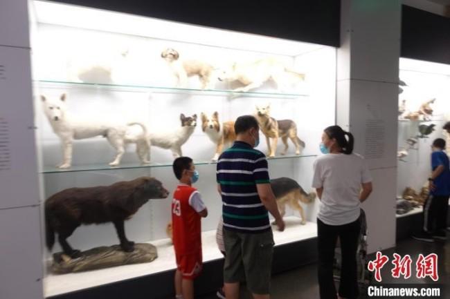 观众在国家动物博物馆内参观展品。郝凌宇 摄