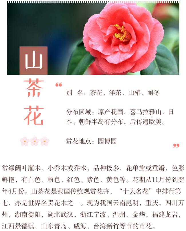 2021年2月深圳赏花地点汇总 附二月花历和简介
