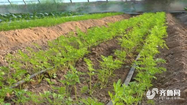 """聊城全力推进农业发展 建设""""鲁西种苗谷"""" 年产优质蔬菜种苗有望15亿株"""