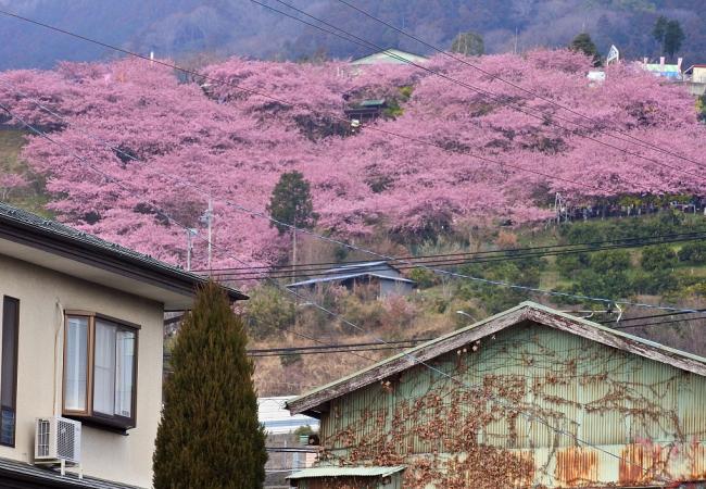 日本神奈川再现神秘异臭:味如臭鸡蛋 已出现17次