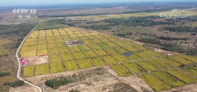 【丰收中国】内蒙古:1万亩沙漠粮食迎来丰收 有力推进乡村振兴
