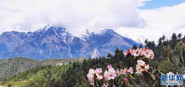 西藏吉隆沟:珠峰后花园